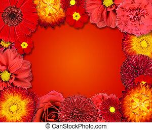 bloem, frame, met, rode bloemen, op, oranje achtergrond