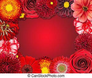 bloem, frame, met, rode bloemen, op, purpere achtergrond