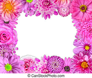bloem, frame, roze, paarse , rode bloemen, op wit