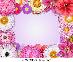 bloem, frame, roze, paarse , rode bloemen
