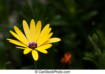 bloem, gele