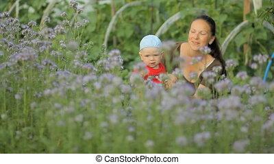 bloem, haar, paarse , jonge, pasgeboren, akker, vasthouden, moeder, baby