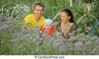 bloem, haar, paarse , vader, jonge, pasgeboren, akker, vasthouden, moeder, baby