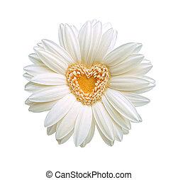 bloem, hart