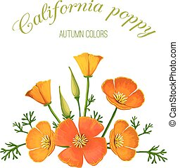 bloem, illustratie, vector, californië, arrangement., poppy.