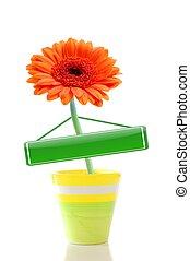 bloem, in, pot, met, copyspace