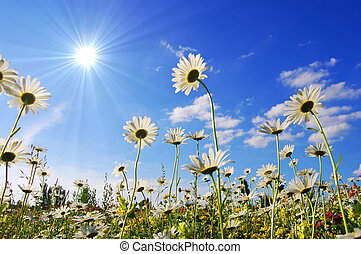 bloem, in, zomer, onder, blauwe hemel