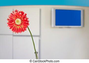 bloem, kantoor, moderne, hal, sinaasappel, gerbera