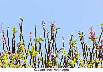 bloem, met, blauwe hemel