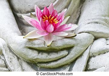bloem, op, boeddha, holdingshanden, afsluiten