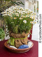bloem pot, met, witte , madeliefjes