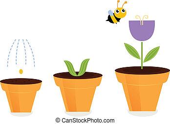 bloem, ), (, potten, vrijstaand, tulp, groei, witte , stadia