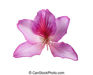 bloem, roze, mooi