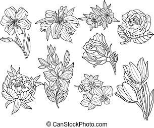 bloem, set., illustratie, hand, vector, getrokken