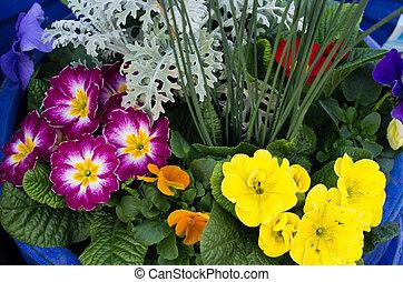 bloem, sleutelbloemen, regeling
