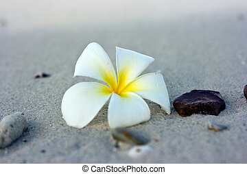 bloem, strand