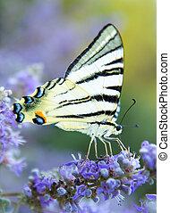 bloem, vlinder, open, vleugels
