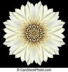bloem, vrijstaand, black , witte , mandala, kaleidoscope