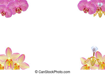 bloem, vrijstaand
