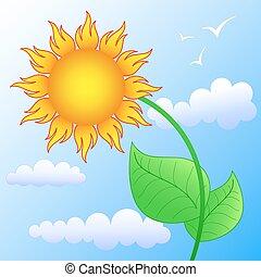 bloem, zon