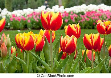 bloembed