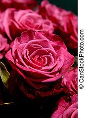 bloemen, 2