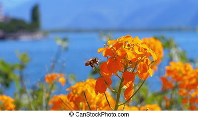 bloemen, bergen, montreux., alpien, zwitserland, tegen,...