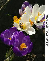 bloemen, en, bij