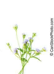 bloemen, gras, op wit, achtergrond
