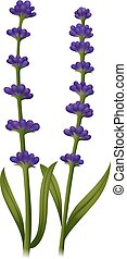 bloemen, groene, lavendel, stengel