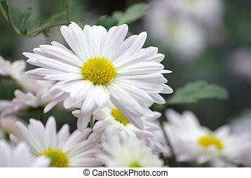 bloemen, in, tuin