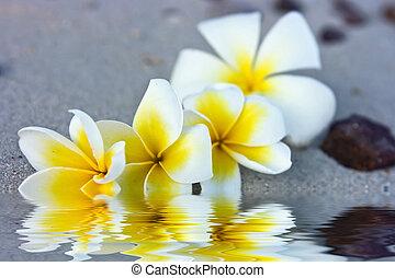 bloemen, in, water