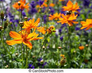 bloemen, in, zomer