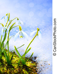 bloemen, kunst, sneeuw, bos, lente, snowdrop