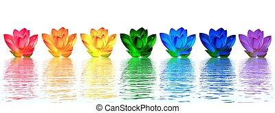 bloemen, lelie, chakras