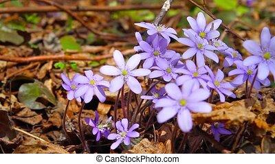 bloemen, lente, glijder