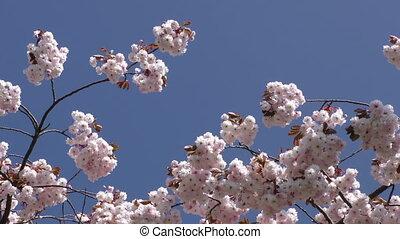 bloemen, op, boompje