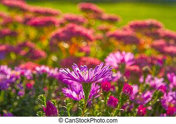 bloemen, op, een, bed