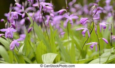 bloemen, orchidee