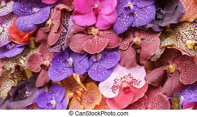 bloemen, orchidee, tentoonstelling, kleurrijke, broeikas