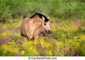 bloemen, pony, dun