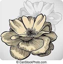 bloemen, roos, vector, hand-drawing.
