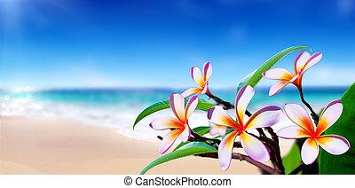 bloemen, strand, plumeria