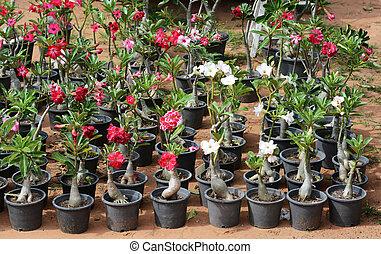 bloemen, te koop