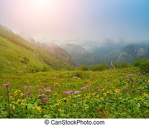 bloemen, tegen, mooi, berg overzicht