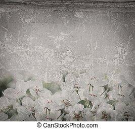 bloemen, van, de, kers ontwikkelt