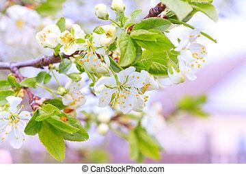 bloemen, zacht, appelbomen