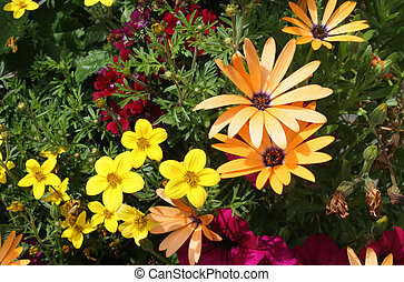 bloemenrand