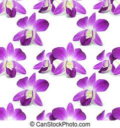bloempatroon, vrijstaand, seamless, ontwerp, achtergrond, witte