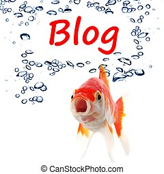 blog blogger or internet blogging concept with goldfish